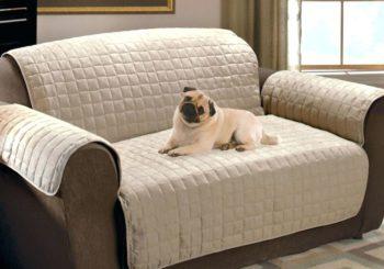Pets dentro de casa: quais são os cuidados necessários com o sofá?